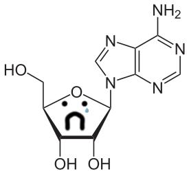 Sad adenosine