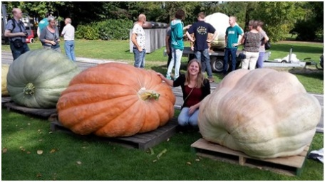sophie-pumpkin