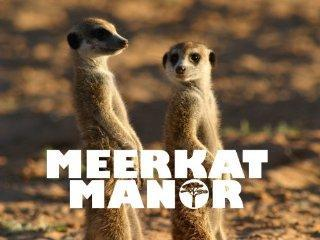 Meerkat Manor: a reality show about meerkats